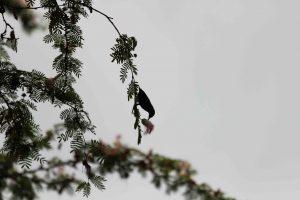 BIRD DR Congo Kinshasa