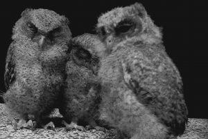 OWLS Thailand